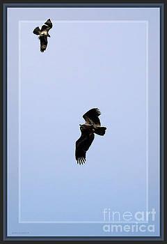 Sandra Huston - Framed Eagle and Osprey Fighting Against All Odds