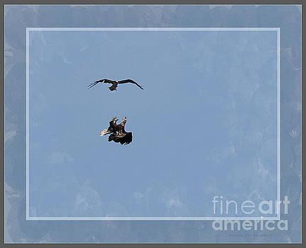 Sandra Huston - Framed Fighting Eagle And Osprey