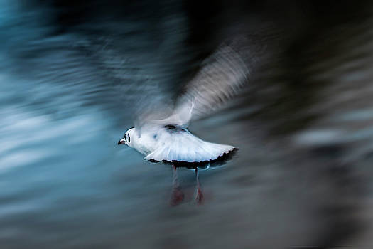 Free as a bird by Christine Sponchia