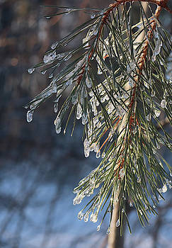 Freezing Rain Decoration by David T Wilkinson
