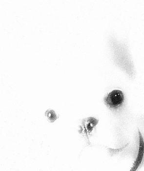 Mike Breau -     French Boxer- French bulldog-black and white minimalism