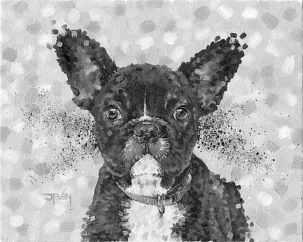 French Bulldog by Steven Thomas Rouse