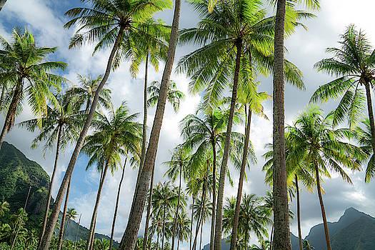 French Polynesia by Noah Lang