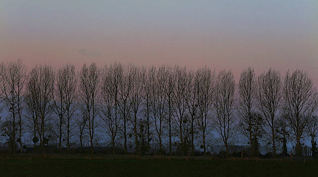 French Trees at Dawn by Fred Hood