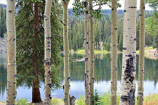 Freshwater Lake Through the Aspens by Tammie J Jordan