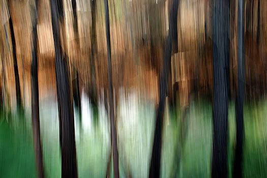 Frio by Bill Morgenstern