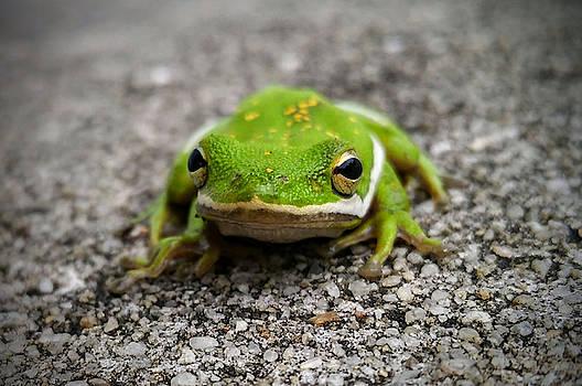 Frogger by Vincent Autenrieb
