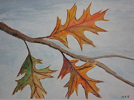 From My Window - Autumn by Cynthia Schoeppel