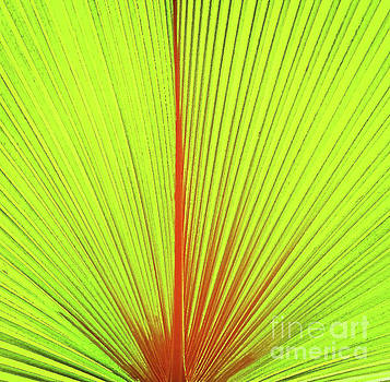 Sharon Williams Eng - Frond Abstract