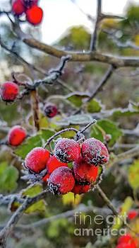 Frosty Fruit by Randy Kostichka