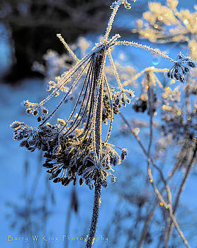 Frozen Dill by Barry W King