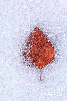 Frozen by Susan Warren