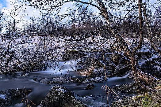 Frozen tree in winter river by Kai Mueller