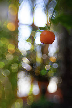 Fruity by Brian Hale