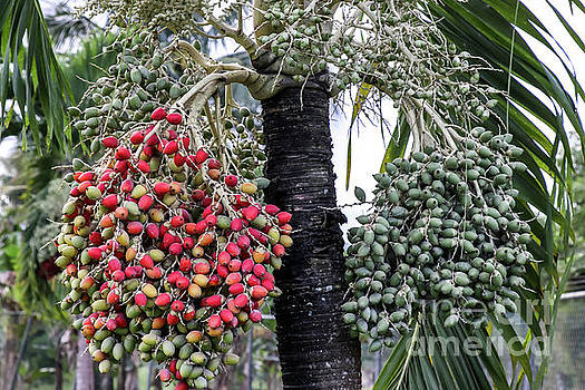 Fruity Palm Tree  by Rory Ivey