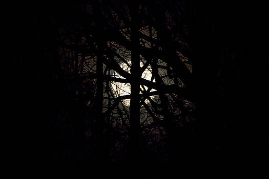 Full Moon Between the Trees by David Stasiak