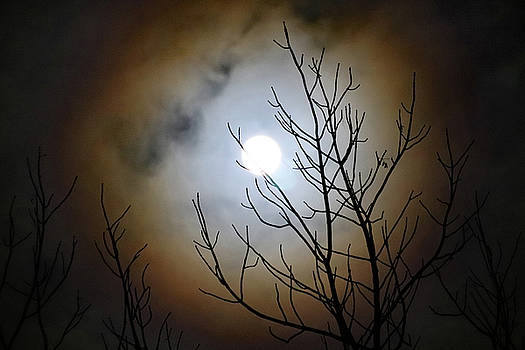 Full Moon Halo by David T Wilkinson