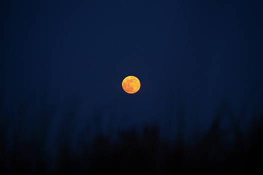 Full Moon Rising 12 by David Stasiak