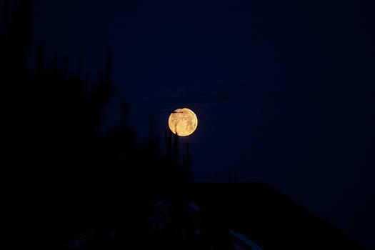 Full Moon Rising 3 by David Stasiak