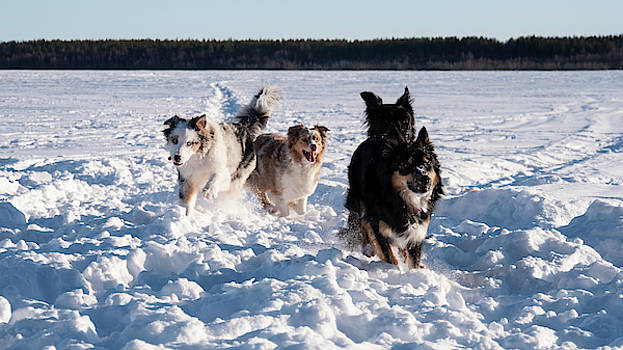 Funny dogs playing in winter landscape by Tamara Sushko