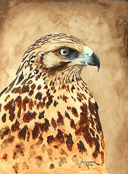 Galapagos Hawk Portrait by Nelson Hammer