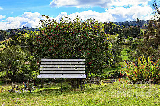 Garden Bench on the Andes Mountains in Colombia by Devasahayam Chandra Dhas