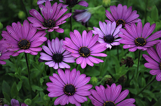 Garden Flowers by Savannah Gibbs