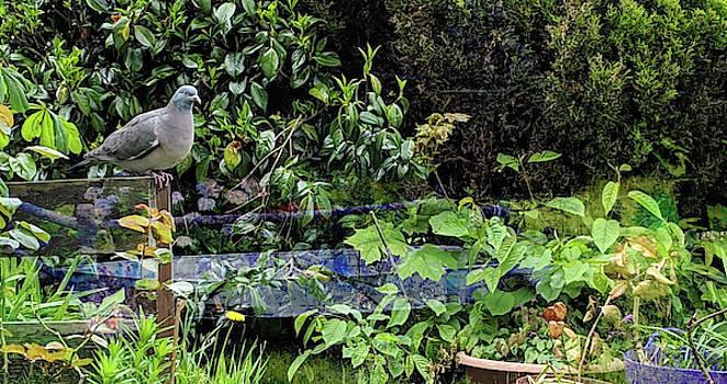 Mike Breau - Garden Guardian