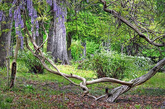 Garden in the Woods by Savannah Gibbs