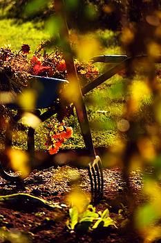Garden party by Valerie Dauce