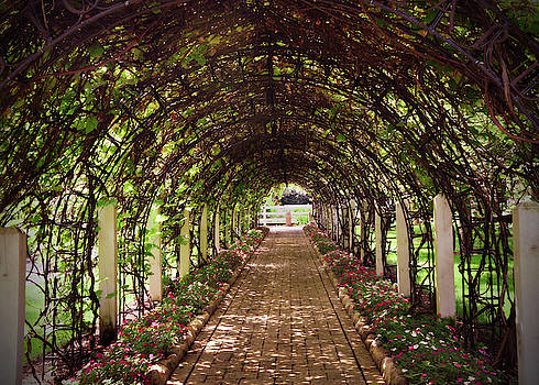 Garden Path by Jayne Gohr