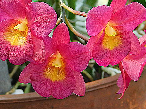 Garden Series - Orchid Hothouse by Arlane Crump