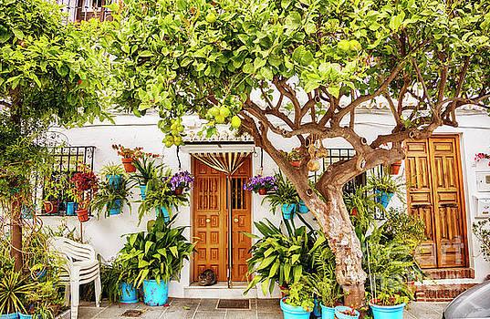 Ariadna De Raadt - garden trees on cozy street