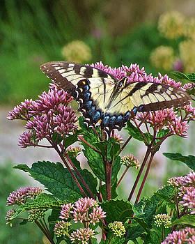 Garden Visit Tiger Swallowtail by Janis Nussbaum Senungetuk