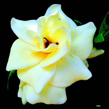 Gardenia In Sunlight and Shadow by VIVA Anderson