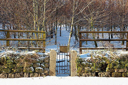 Gate into Forest by Helen Northcott