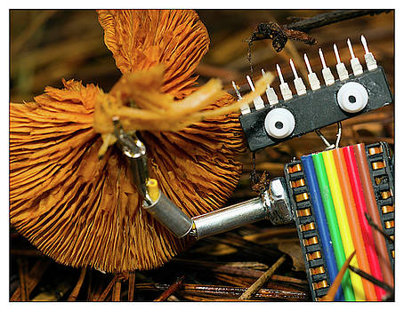 Gathering Mushrooms by Lu Prescott