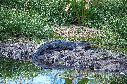 Gator River Reflection by Judy Hall-Folde