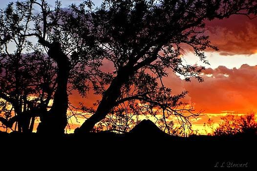 Gavilan Peak through the Mesquite by L L Stewart