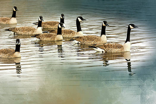 Geese In Formation  by John Bartelt