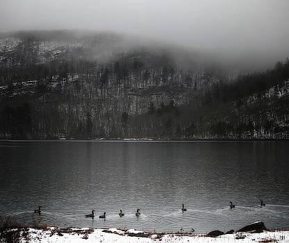 Geese on Mirror Lake by John Meader