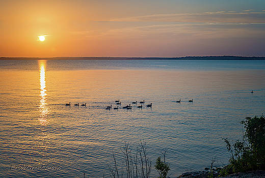Geese Patrol by Erich Grant