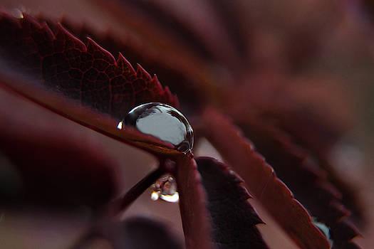 Gem Drop by Tim Beebe