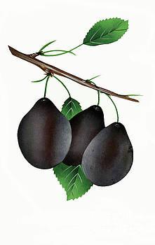 Nikki Vig - German Prunes Fruit Vintage Art