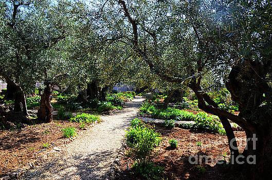 Gethsemane Garden 1 by Del Art