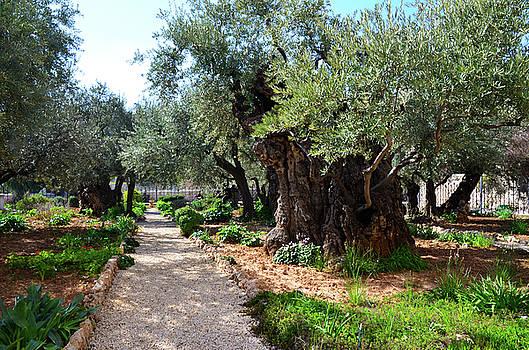 Gethsemane Garden 2 by Del Art