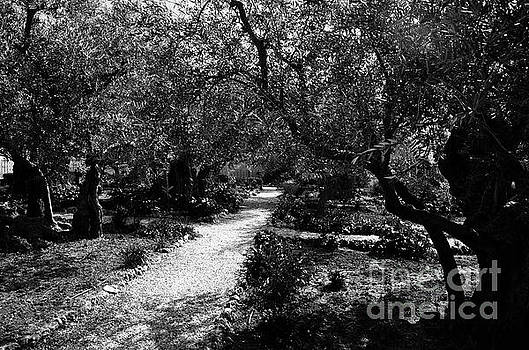 Gethsemane Garden 3 by Del Art