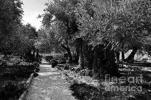 Gethsemane Garden 4 by Del Art