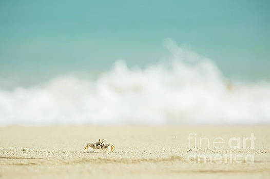 Ghost Crab and Ocean - Oahu Hawaii by Charmian Vistaunet
