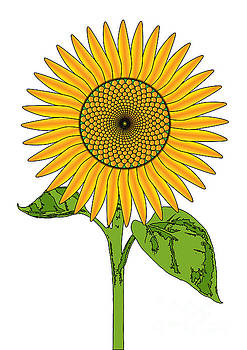 Giant Bright Sunflower Drawing by Bigalbaloo Stock